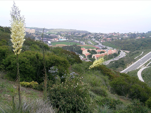 View of Pepperdine University